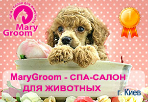 Школа груминга MaryGroom
